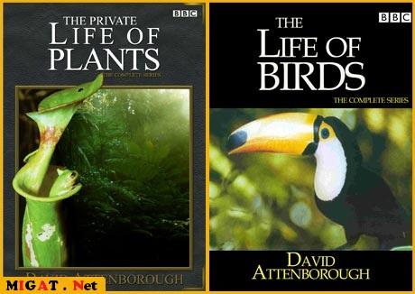 http://img.migat.net/multimedia/documentaries/bbc-wildlife-collection/PostBit9.jpg