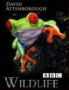 کلکـسیون عظیم تمامی مستندهای حیات وحش BBC از سال 1979 تا 2010
